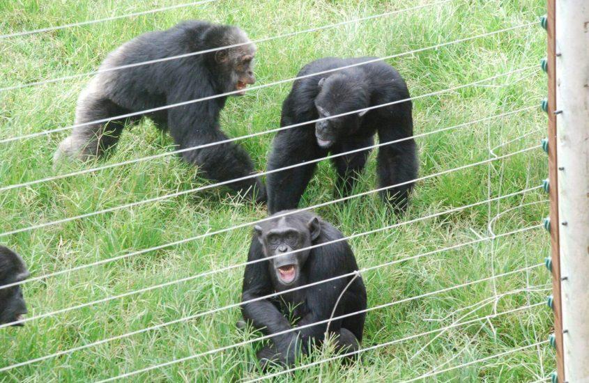 NGAMBA ISLAND: Apes, Birds & Serenity