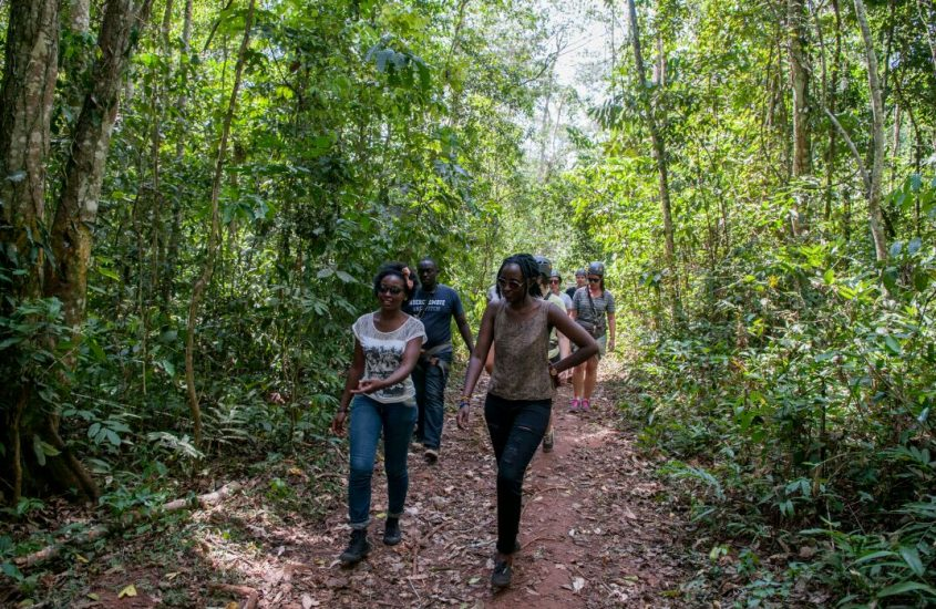 A Night In Mabira Forest